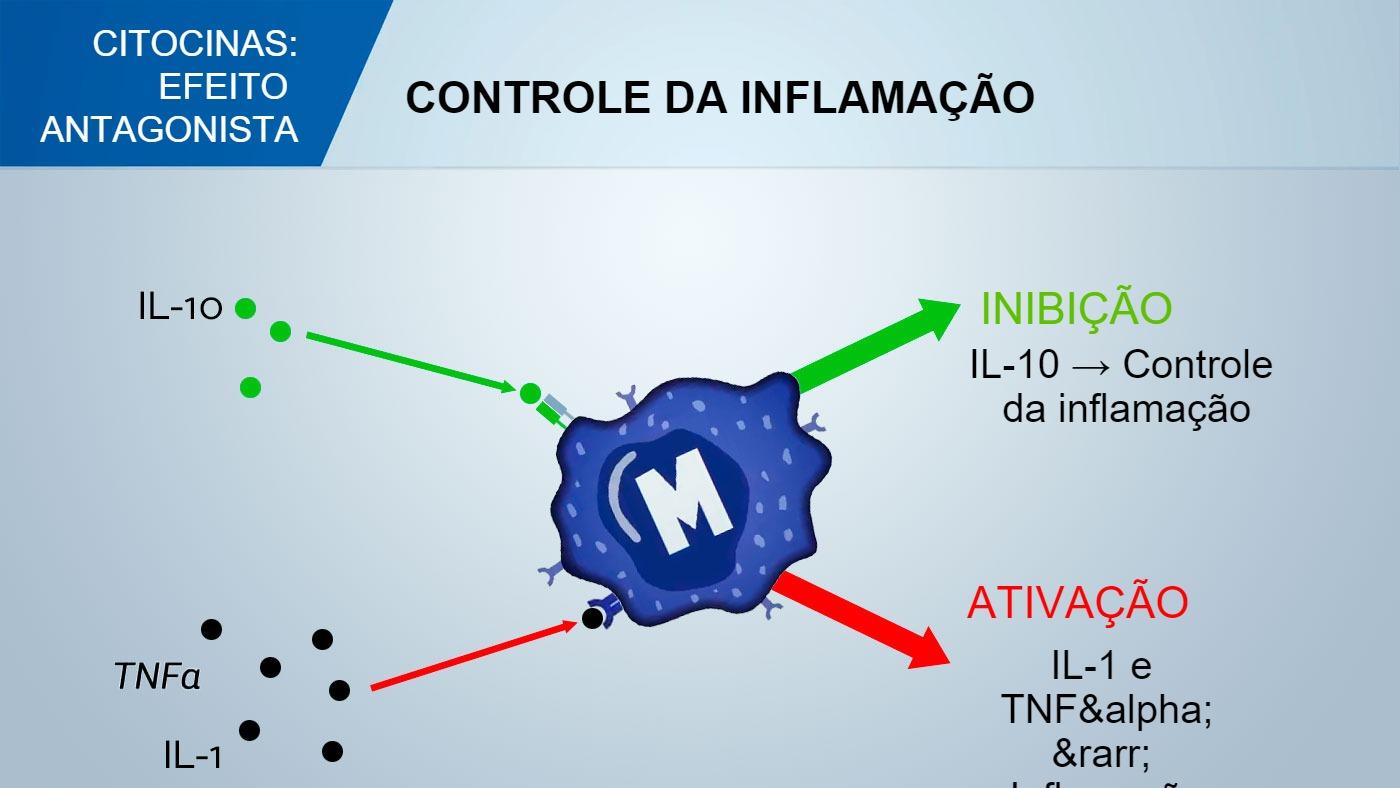 O Sistema Imunologico E A Imunidade No Suino Regulacao Das Citocinas Artigos 3tres3 A Pagina Do Suino
